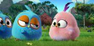 Сердитые птички. Пушистики