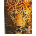 Calligrata Дневник школьный Леопард для 5-11 классов