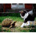 """Набор для раскрашивания Цветной """"Котенок и черепаха"""", 50 х 40 см"""